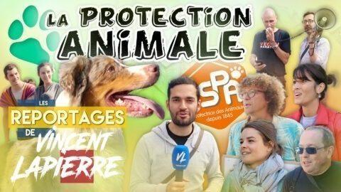 LA PROTECTION ANIMALE – Les Reportages de Vincent Lapierre