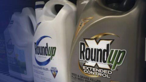 Le glyphosate ne serait pas cancérigène selon un rapport parlementaire…