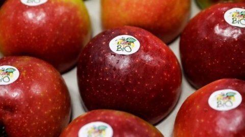 10% des agriculteurs français travaillent désormais en bio