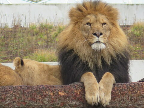 Pas Gorafi : Les animaux mâles surreprésentés dans les musées d'histoire naturelle, selon une étude