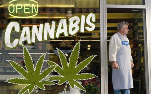 Vers une légalisation du cannabis en France ?