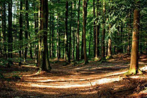Pendant ce temps, le gouvernement privatise en douce l'Office National des Forêts