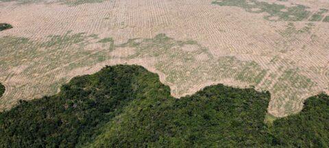 Selon une étude, d'ici 50 ans l'Amazonie pourrait devenir une savane aride