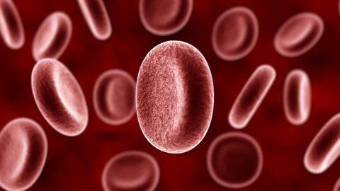 Les personnes de groupe sanguin A seraient plus sensibles au coronavirus