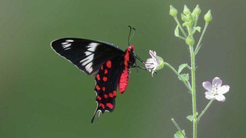 Symptôme d'une extinction de masse, un quart des insectes ont disparu depuis 1990