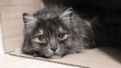 Face à l'inaction du gouvernement, «des milliers d'animaux pourraient être euthanasiés» prévient la SPA