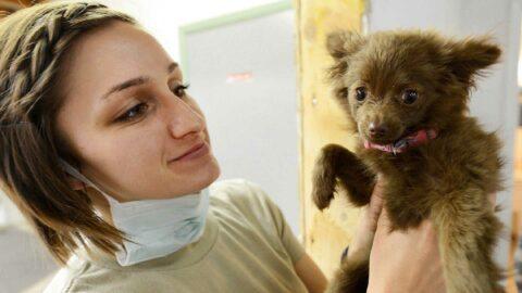 Face à une possible pénurie de médicaments, la France envisagerait d'utiliser les stocks des vétérinaires